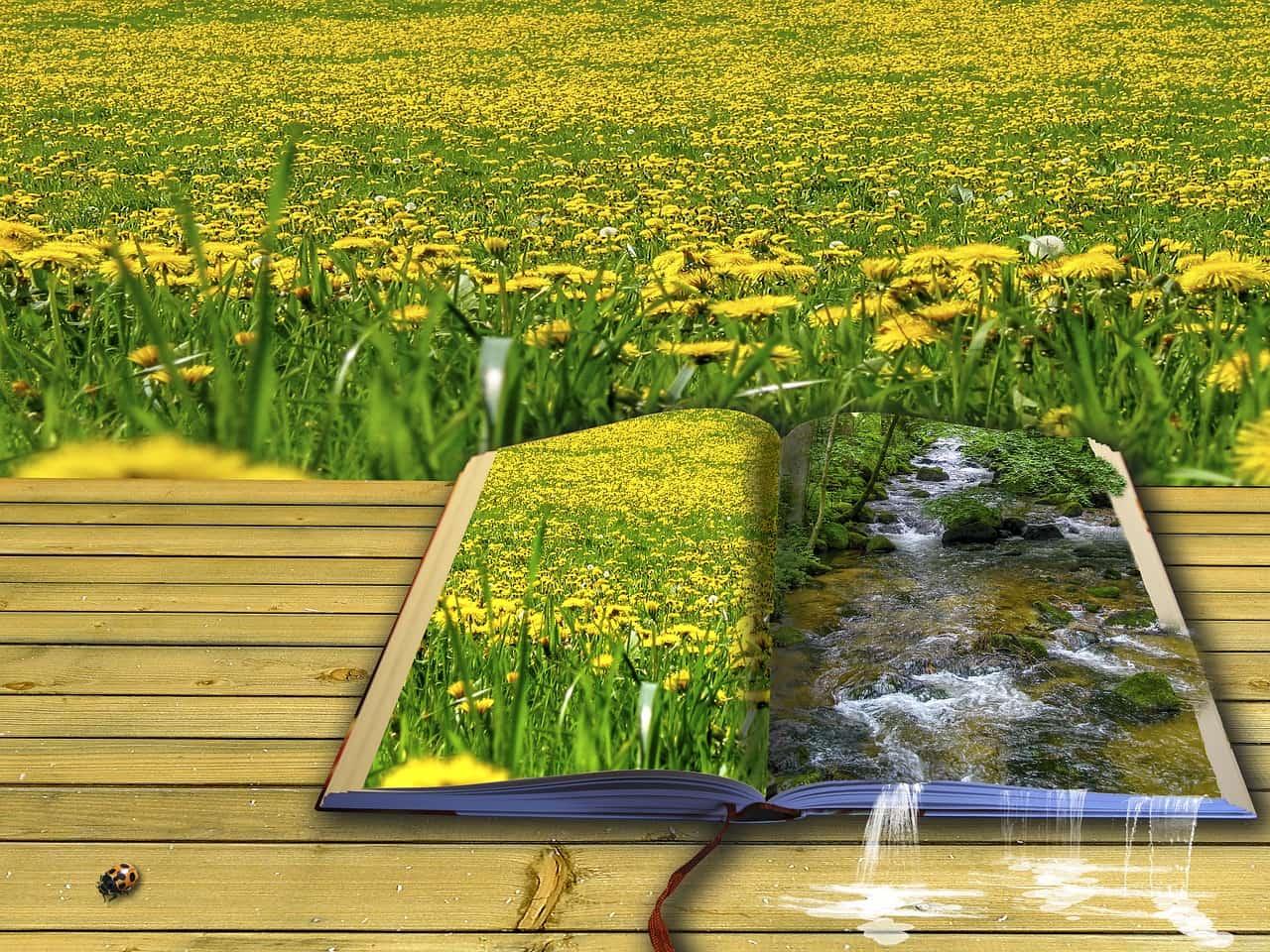Poesie Wiese von Roland Mey - pixabay.com - Creative Commons CC0