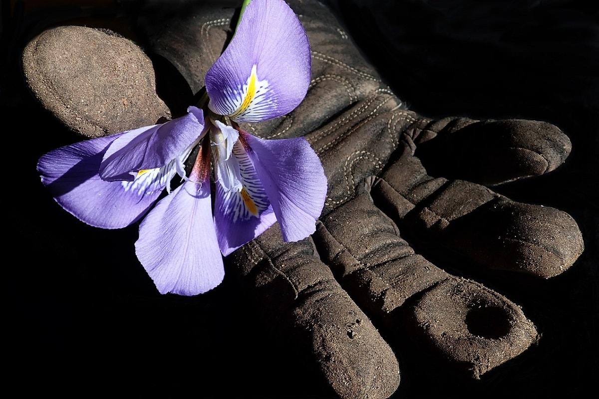 Blume und Arbeiterhandschuhe. (Foto: Beverly Buckley, Pixabay.com, Creative Commons CC0)